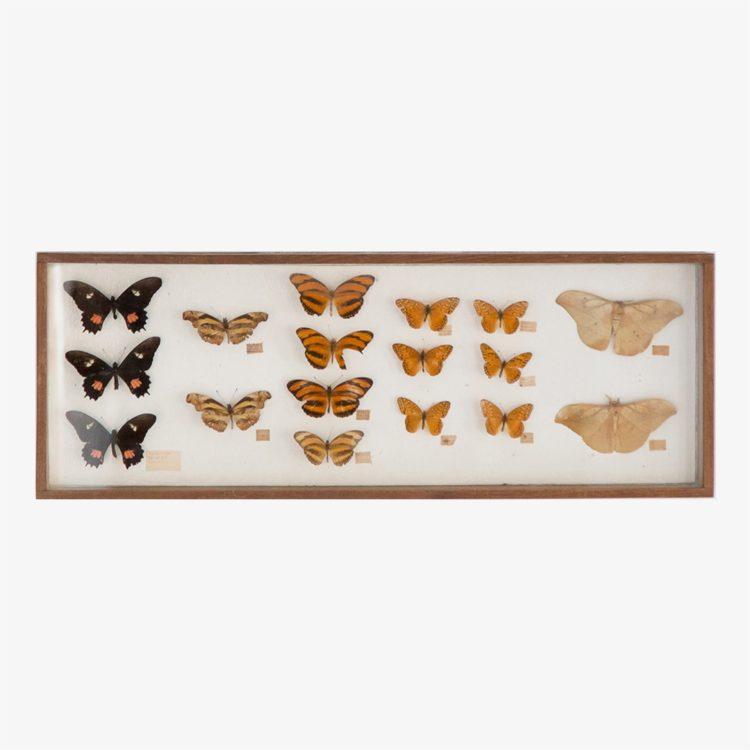mariposas.-caja-grande-01.921