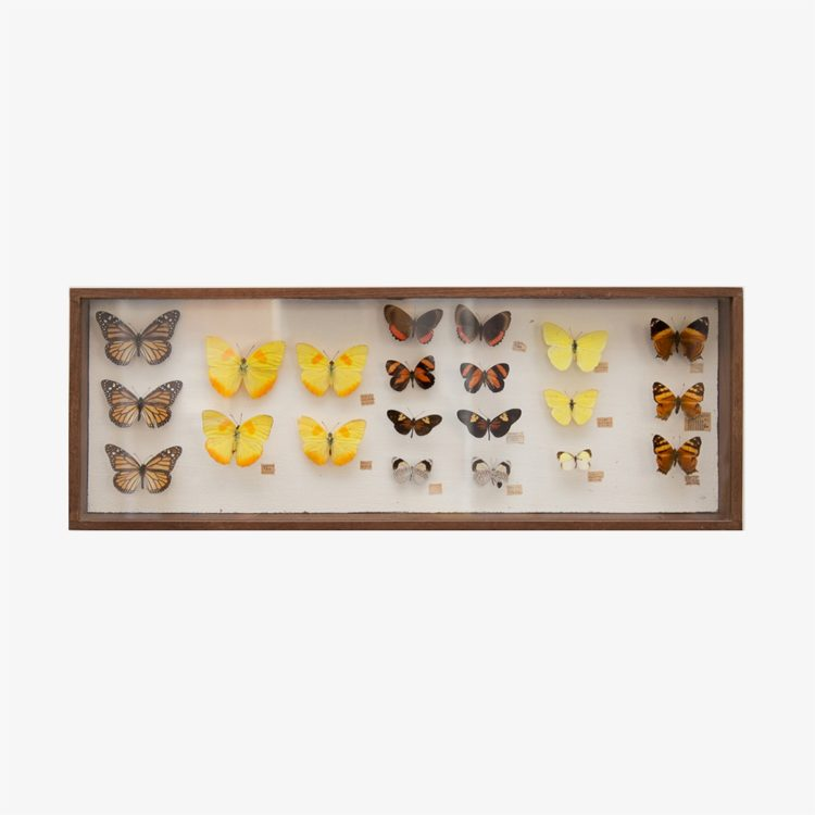 mariposas.-caja-grande-03.921